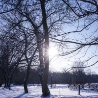 Мороз и солнце ... :: Лариса Корж