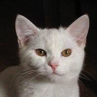 Кот. Просто кот) :: Георгий Светлов