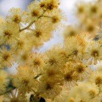 Запахло весной ! :: Александр Криулин