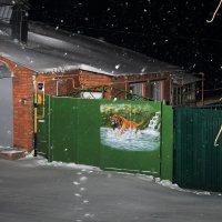 Снежный тигр :: Юрий Гайворонский