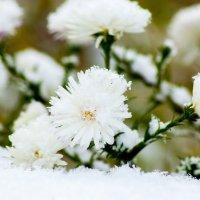 Первый снег :: Анна Останина