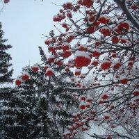 Зимнее украшение :: Стас Борискин (Stanisbor)
