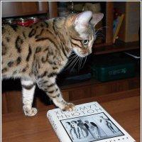 1Марта - Всемирный день Кошек :: muh5257