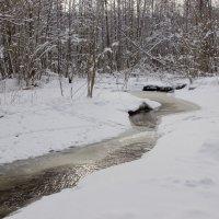 лесной ручей :: оксана