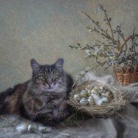1 марта - Всемирный день кошек :: Ирина Приходько