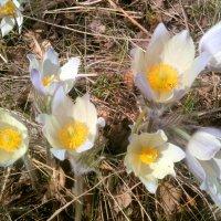 Весна. :: Валентина Богатко