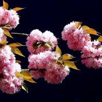 С первым днём весны! :: Юрий. Шмаков