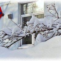 зима пришла... :: Валентина. .