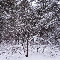 А снег идет. :: Елена Тренкеншу