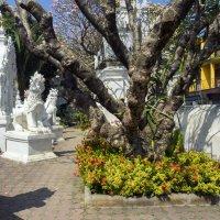 Таиланд, разное (1) :: Владимир Шибинский