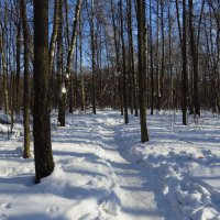 Март похожий на март :: Андрей Лукьянов