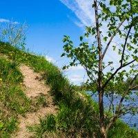 Весенняя прогулка :: Инна Батищева