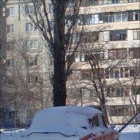 Ветеран под покровом :: Нина Корешкова
