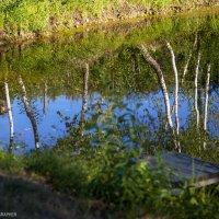 Озеро :: Ольга Милованова