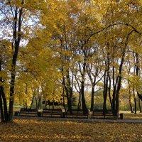 Осенью в парке :: Ольга Беляева