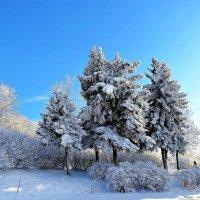 Зимняя Сказка... :: Sergey Gordoff