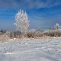 Про мороз :: Владимир Колесников