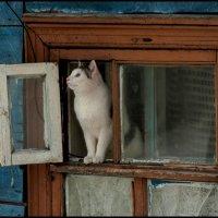 Март :: Алексей Патлах