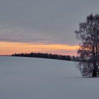 пасмурное утро :: Николай Мальцев