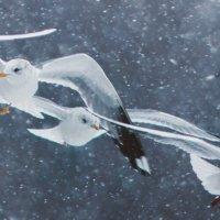 птицы :: Алексей Руднев