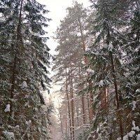 Зимний лес :: Mavr -