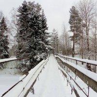 Висячий мост через реку Паша в деревне Каливец :: Елена Павлова (Смолова)