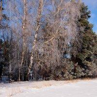 вдоль снежного поля :: Александр Прокудин