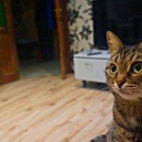 Наша кошка :: Mavr -