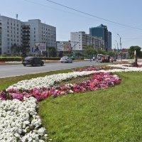 Цветы на улицах Оренбурга :: MILAV V