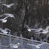 Чайки над променадом :: Маргарита Батырева