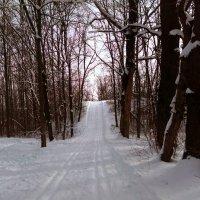 Прогулка в лесу ... :: Aleks Ben Israel