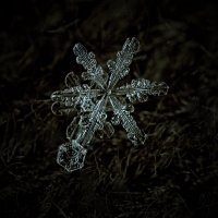 Снежинки :: Александр Корсиков