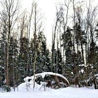 Снежный март 2018. :: Михаил Столяров