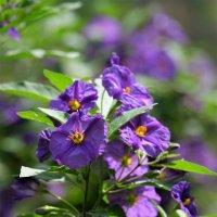 цветок фиолет :: Александр Деревяшкин