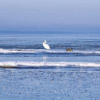 Лебеди среди льдин :: Helga Preiman