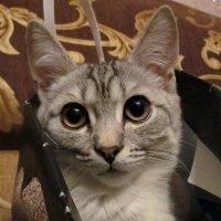 Котик в сумочке :: OLLES