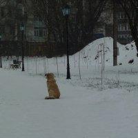 Ожидание... :: Murat Bukaev