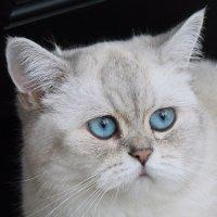 Голубоглазка :: Колибри М