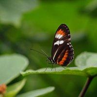 Бабочки в Бенальмадене (2) :: Виталий Авакян