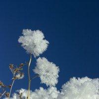 Зимние цветы :: Оксана Сергеева