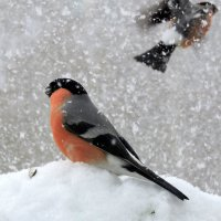 Снегопад . :: Hаталья Беклова