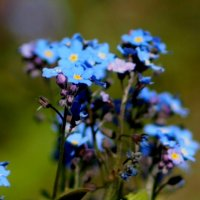 про синие цветики 2 :: Александр Прокудин