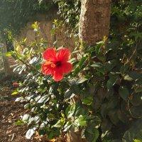 Аленький цветочек. :: Инна Крыжановская