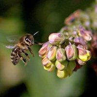 Ожили пчёлки :: Alexander Andronik
