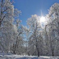 Морозное утро :: Седа Ковтун