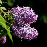 Притягательность цветочных дивных снов :: Татьянка *