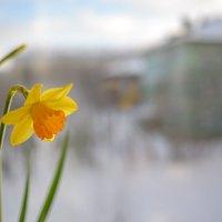 Балконные истории зимнего сада :: Иваннович *