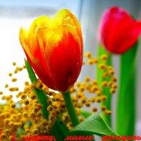 Всех прекрасных дам с 8 марта! :: Андрей Заломленков