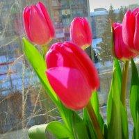 Цветы для мамы . :: Мила Бовкун