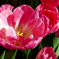 Весна. :: Иван